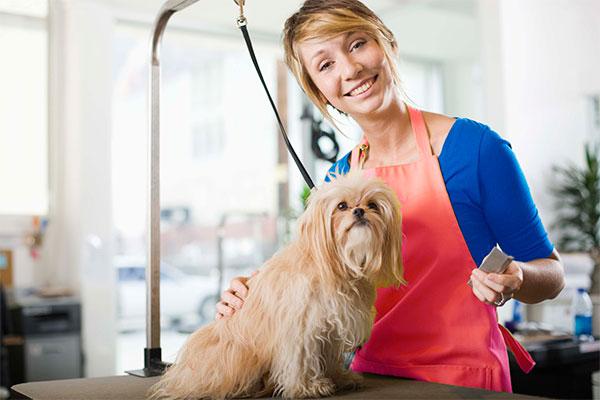 Montar un centro de autolavado de perros y peluquería canina.